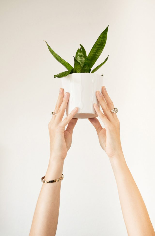 Déménager et amener de la vie par les plantes