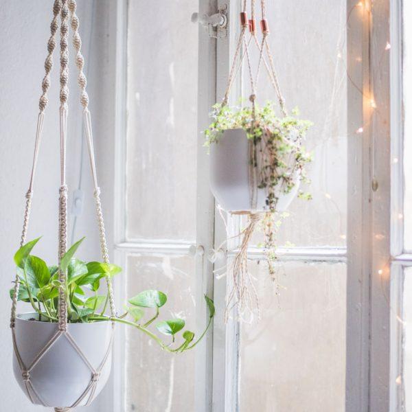 Suspensions végétales décoratives en macramé
